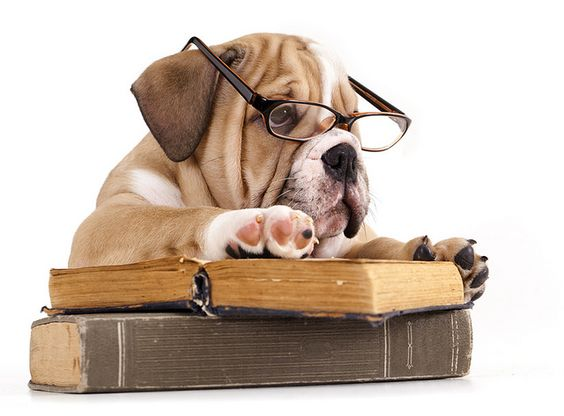 books to bark about: Grit