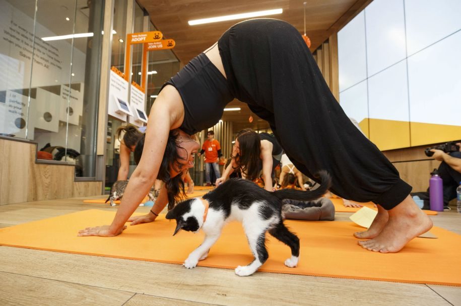 10 Purrrfect Cat Yoga Photos